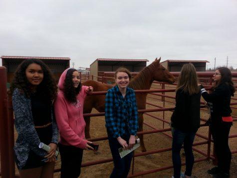 Students Lakaya Holmes, Marianna Lyons-Smith, and Emma Larson learn about animal health on a career cab.