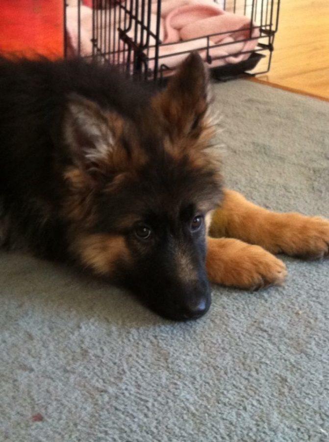 Rylee Sydney Olsen's dog
