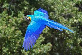 If+you+have+watched+the+movie+Rio+the+Spix%E2%80%99s+Macaw+is+the+bird+that+the+movie+is+based+on.+These+beautiful+birds+are+now+extinct+in+the+wild%2C+however%2C+there+are+still+a+few+left+in+captivity+but+soon+this+bird+will+just+be+a+memory+from+Rio.