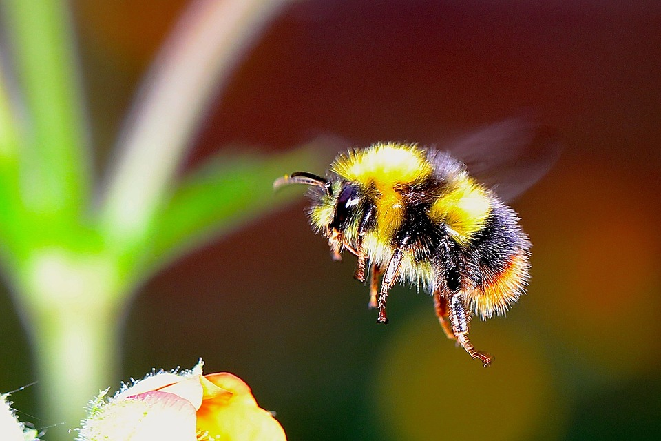 We+all+know+how+important+bees+are+to+our+ecosystem%2C+the+number+of+bees+has+been+declining+rapidly+because+of+insecticides%2C+herbicides%2C+and+global+warming.+Ten+percent+of+European+bees+face+extinction+and+half+of+the+bees+are+expected+to+be+endangered+in+the+near+future.